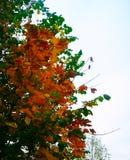 Листья желтого цвета в лесе осени Стоковые Фото