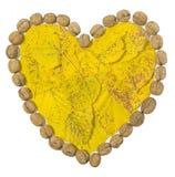 Листья желтого цвета и несколько грецких орехов сформировали Харт на белизне Стоковая Фотография