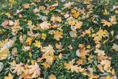 Листья желтого цвета на зеленой траве Стоковые Изображения RF