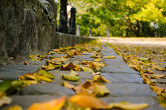 Листья желтого цвета на камнях Стоковая Фотография RF