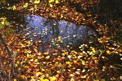 Листья желтого цвета на озере Стоковые Фото