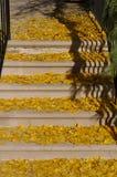 Листья желтого цвета на шагах Стоковые Изображения