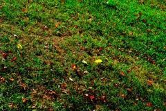 Листья желтого цвета осени на траве стоковое изображение