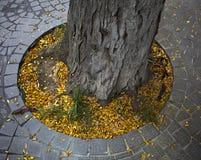 Листья желтого цвета осени под деревом Стоковые Фотографии RF