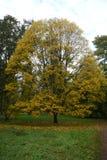 Листья желтого цвета осени Стоковые Фотографии RF