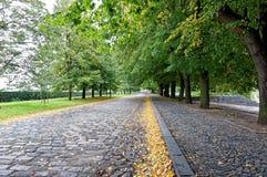 Листья желтого цвета от вала стоковая фотография