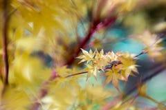 Листья желтого цвета с селективным фокусом Стоковые Изображения RF