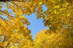 Листья желтого цвета Стоковые Изображения RF
