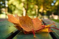 Листья желтых и красного цвета на стенде Стоковое Изображение RF