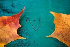 Листья желтых и красного цвета на стенде Стоковая Фотография