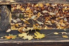 Листья желтых и красного цвета на стенде Стоковые Изображения RF