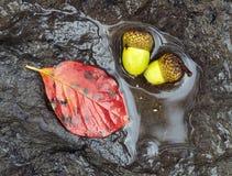 листья жолудей Стоковая Фотография