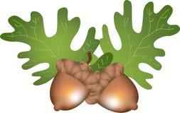 листья жолудей иллюстрация вектора