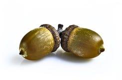 листья жолудей Стоковые Фото