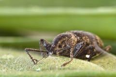 листья жука Стоковые Фото