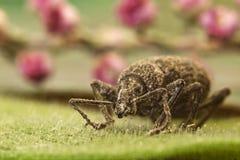листья жука Стоковые Фотографии RF