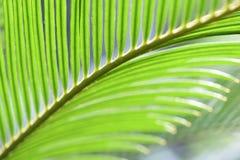 Листья заводов под светом стоковое фото