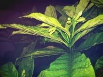 Листья заводов Стоковое Изображение