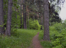 Листья завода отстают gree деревьев дерева природы леса весны сосны дороги травы парка лист тропы хобота полесья мха outdoors con Стоковая Фотография RF