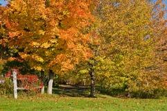 листья загородки осени Стоковое Изображение