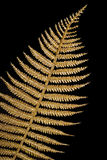 листья закрытого флористического золота предпосылки золотистые вверх Стоковая Фотография
