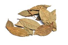 листья залива Стоковое фото RF