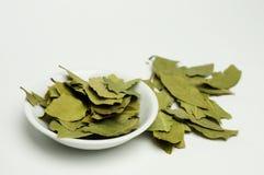 листья залива Стоковое Изображение RF