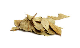 Листья залива Стоковое Фото