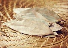 Листья залива стоковая фотография