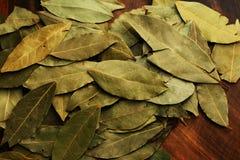 листья залива Стоковые Изображения RF