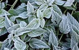 листья заморозка Стоковое фото RF
