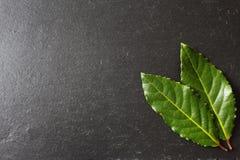 Листья залива на плите шифера Стоковое Изображение