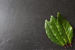Листья залива на плите шифера Стоковое Фото