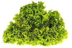 листья зеленого салата на белой предпосылке стоковые изображения