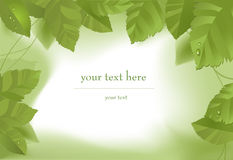 листья зеленого цвета граници Стоковые Фото