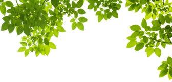 листья зеленого цвета граници Стоковые Фотографии RF