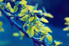 Листья зеленого цвета завода свежие Стоковое Изображение