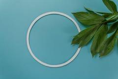 Листья зеленого цвета на предпосылке сини цвета Стоковые Изображения