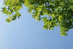 Листья зеленого цвета, отмелый фокус Стоковые Изображения RF