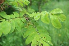 листья зеленого цвета падения росы стоковое изображение