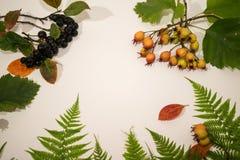 Листья зеленого цвета папоротника свежие стоковое изображение