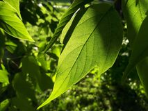 Листья зеленого цвета под солнцем стоковые изображения