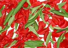 Листья зеленого цвета предпосылки текстуры, розовый лепесток. стоковые фото