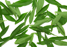 Листья зеленого цвета предпосылки текстуры. стоковые изображения rf