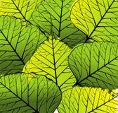 листья зеленого цвета предпосылки иллюстрация штока