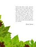 листья зеленого цвета рамки свежие Стоковые Изображения