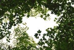 листья зеленого цвета рамки Стоковые Фотографии RF