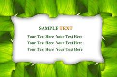листья зеленого цвета рамки Стоковое фото RF