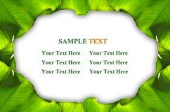 листья зеленого цвета рамки Стоковое Фото