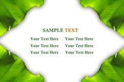 листья зеленого цвета рамки Стоковое Изображение RF
